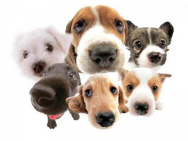 Пищевая аллергия у кошек и собак