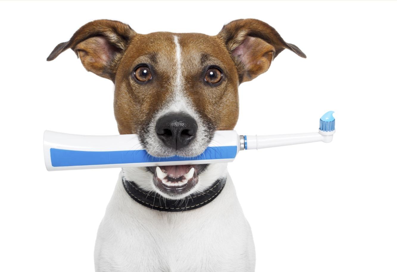 Наиболее распространенные стоматологические заболевания и болезненные состояния собак и пути их профилактики