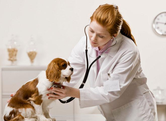 сердечная недостаточность у собак и кошек