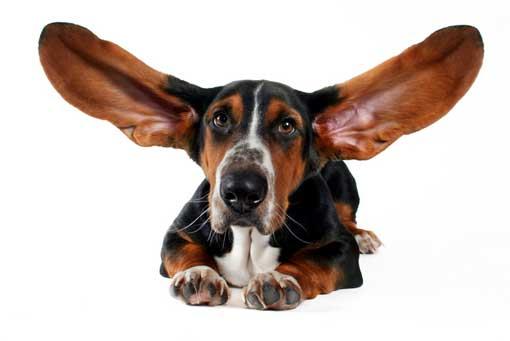 Малассезиозный отит у собак и кошек ветмакс киев нивки