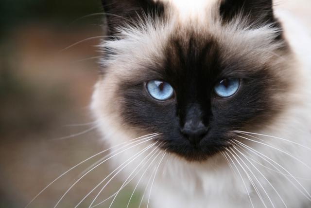 Стерилизация кошек и собак Ветмакс Киев
