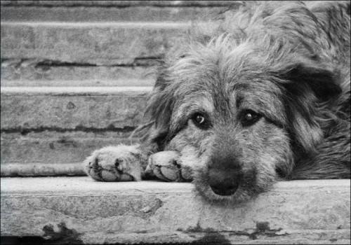 стерилизация собак и кошек киев нивки