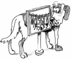 Рентген собаке коту кошке киев нивки
