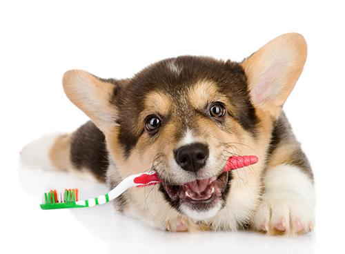 Зубной камень у собак и кошек Ветклиника ВетМакс Киев Нивки